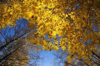 Beautiful autumn trees and blue sky