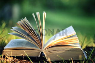 open book with flower on grass
