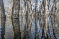 trees submerged in lake water