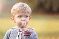 kid blowing dandelion outdoor