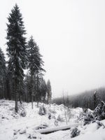 Wintry clearing in the Harz Mountains, Germany