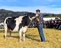 Presentation of the Holstein cow Bianca at the SWISSCOW Topschau Saanenland, Gstaad, Switzerland