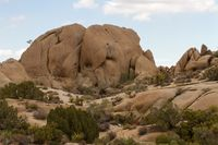 Joshua Tree NP 32