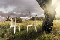Two empty chairs stand under a tree