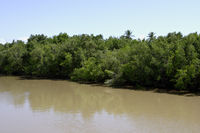 River Landscape by Canavieiras, Bahia, Brazil, South America