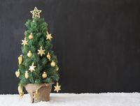 Christmas Tree, Copy Space, Black Concrete