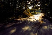 Asphalt road through a dark forest toward sunny forest fringe