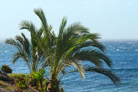 Palm tree on ocean shore.