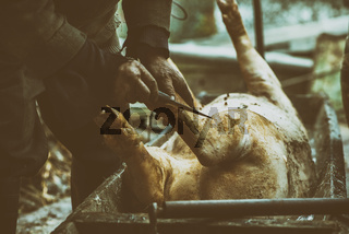 Butcher handles the slaughtered pig with blowtorch, hair removal, preparation to cutting, retro effect, Ukraine