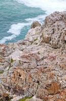 Rock Dassie, South Africa