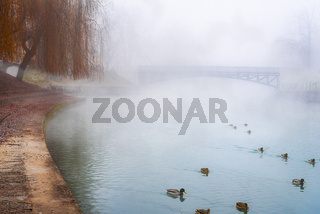 Wild ducks on a misty river