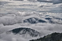 cloudy Black Forest