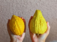 Women's hands holding the etrog