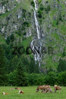 Wasserfall im Oytal im Allgäu mit Kühen im Vordergrund
