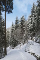 Harz Mountains - Wintry forest path, Germany