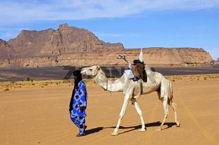 Tuareg Nomade führt ein weisses Reitkamel