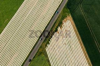 Spagelfelder am Niederrhein.