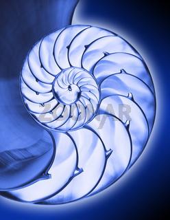 Blue nautilus interior