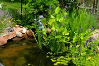 Water Garden Serenade