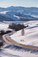 Winter road and trees under snow in Altai
