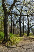 Landschaft mit Bäumen im Harz