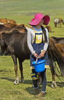 Young Mongolian woman with fashionable hat and milking pail looking for a mare to be milked,Mongolia