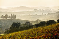 Chianti vineyards, Tuscany, Italy
