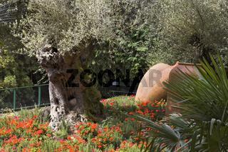 Old Olive Trees Japanese Garden Madeira