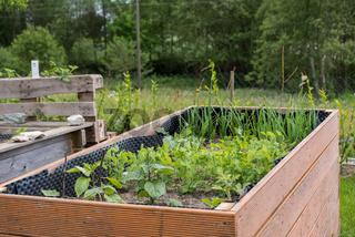 Hochbeet im Frühling mit spriessendem Gemüse