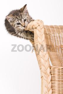 Kätzchen klettert auf einem Korbsessel - kitty climbs on a basket-chair