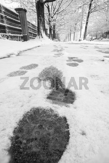 show footprints in snow on sidewalk along the park