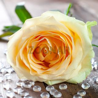 eine gelbe Rose