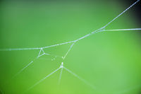 Free-floating cobwebs with dew drops