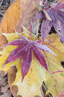 colorful foliage with diamond dust