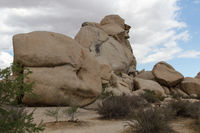 Joshua Tree NP 16