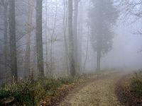 mist, fog, haze, nebula, fog forest,