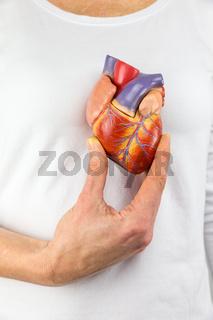 Hand holding model heart on chest