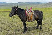 Aufgezäumtes Pferd eines Nomaden mit traditionellem Sattel in der Steppe