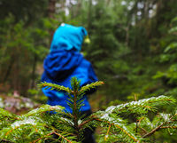 Unrecognizable boy in blue walking away from a spruce tree