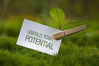 The Words Unfold your Potential with a seedling