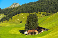 Alpine meadow, moungain farm and protection forest in the Prättigau region near St. Antönien,