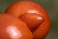 tomato triplet