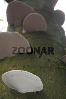Baumschwämme