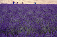 Holidays in Provence