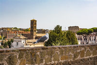 Gull on the outlook with Colosseum. Seagull watching Rome with Colosseum. Bird in the Roman Forum, the historic city center, Roma, Italy.