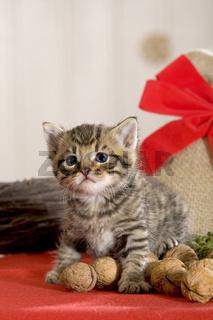 Kaetzchen Weihnachten, kitten christmas