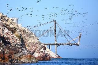 Old pier with birds in Ballestas Islands Reserve in Peru