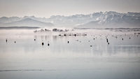 A view over the Ammersee to the Alps