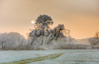Sunset on a foggy winter day with frosted trees