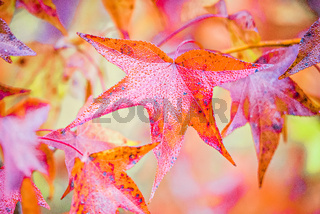 Autumn  leaves decorate a beautiful nature bokeh background with forest ground